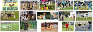 Adiestramientro canino para perros a domicilio en Barcelona