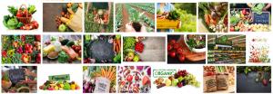 Comida orgánica a domicilio en Barcelona que te renueva por dentro