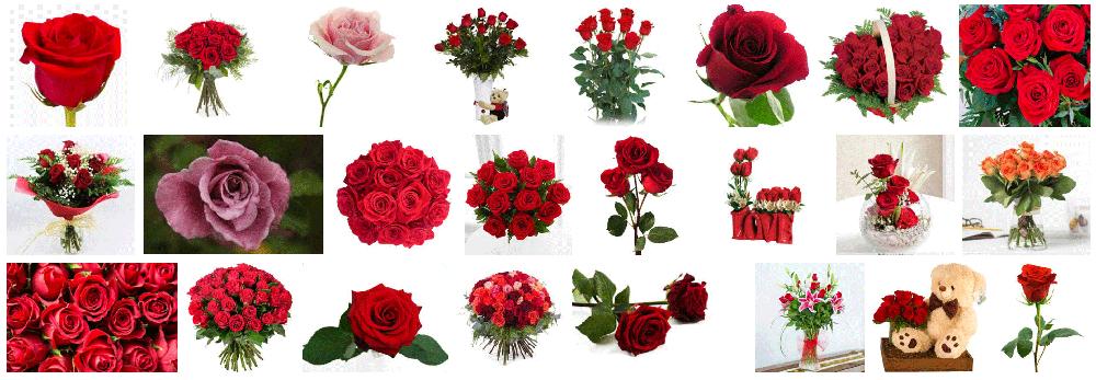 frescas rosas a domicilio en barcelona los 365 días del año