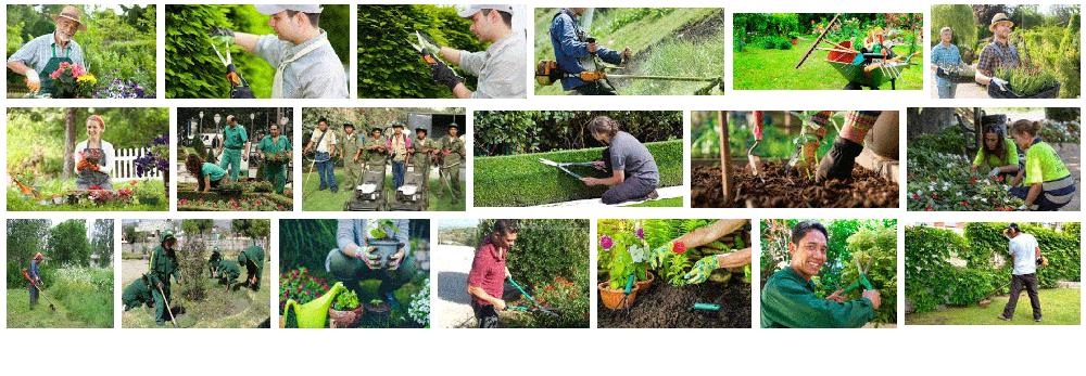 Los jardineros a domicilio en Barcelona trabajan todo el día cortando ramas de los árboles