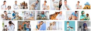 Foto de un Veterinario a domicilio en Barcelona trabajando con perros