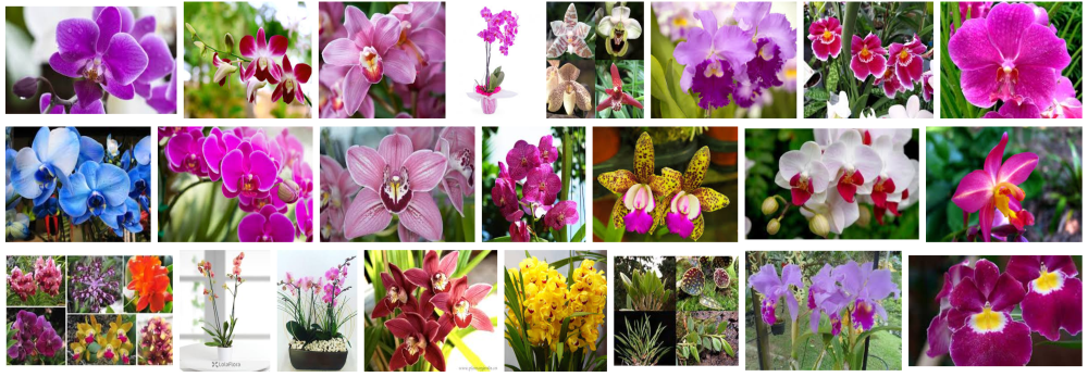 ORCHIDS HOME DELIVERY BARCELONA